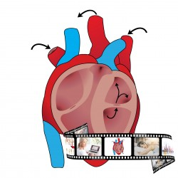 Online-Seminar Herz-Kreislauf
