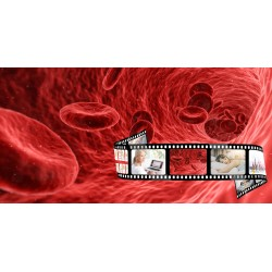 Online-Seminar Blut, Blut...