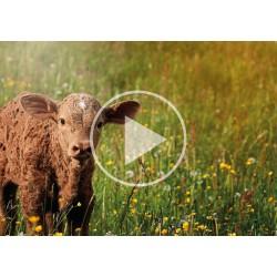 Live-Online-Seminar Tiere...